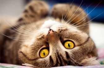 Любовь кошек к нам, есть ли она или они эгоистичны?