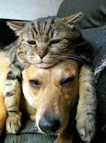 Уроки, которые я получил, имея собаку и кошку