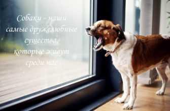 домашний питомец собака общение лай
