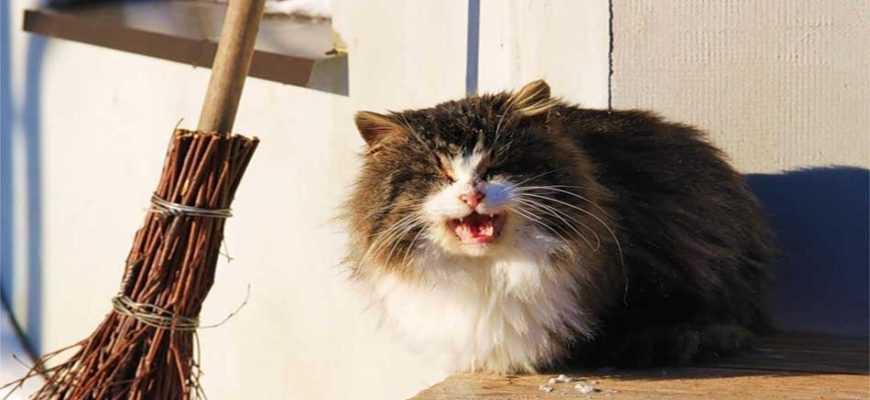 кошка судьба