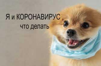 Во время короновируса человек выгуливает собаку с помощью беспилотника