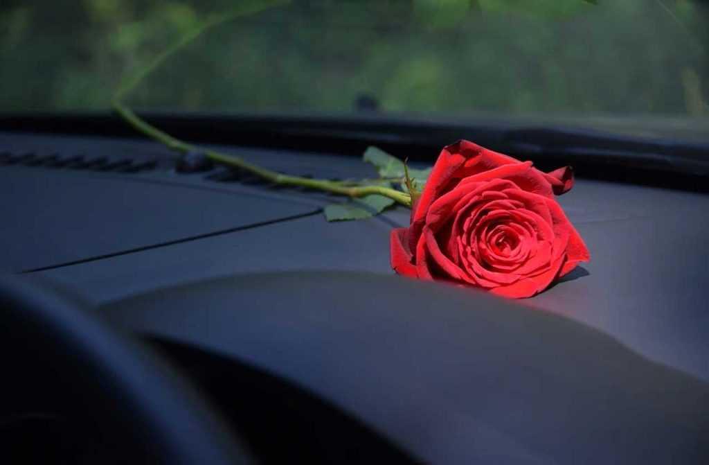 роза муж с помойки