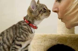 Разговариваете с домашними животными
