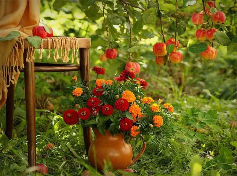 сад, деревенское настроение в саду