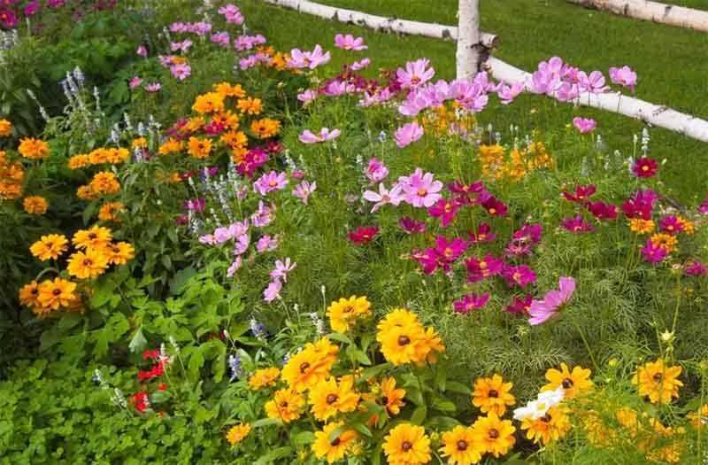 сад, деревенское настроение