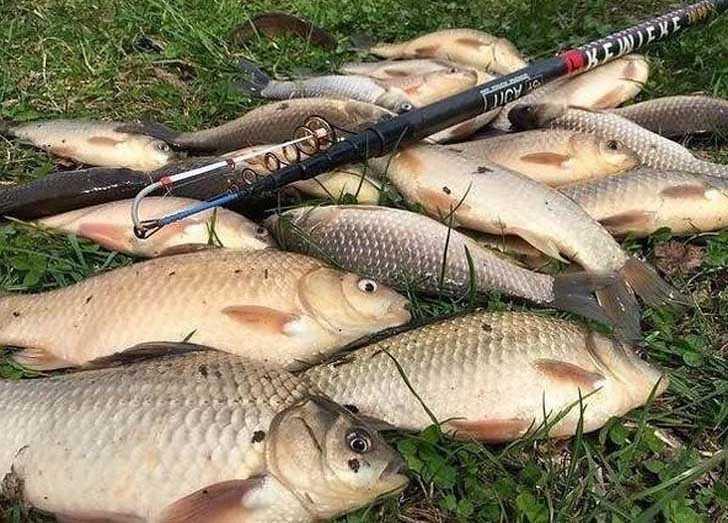 Рыбачить нельзя можно