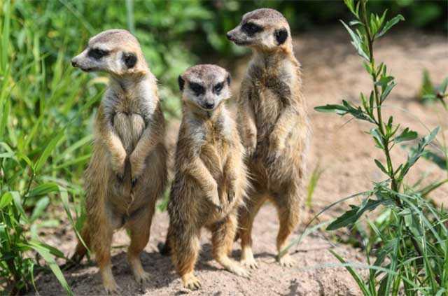 Центр воспроизводства редких животных откроется в Подмосковье