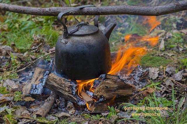 Таежный чай. Кухня и лечение в тайге эвенкийских оленеводов