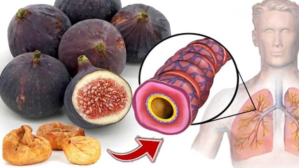 Инжир: польза для здоровья, противопоказания