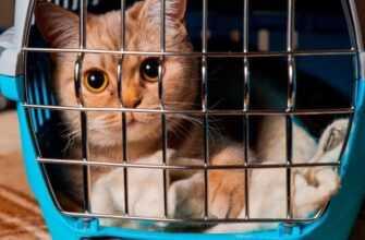 Переноска для кошки, какую выбрать для ее комфорта?