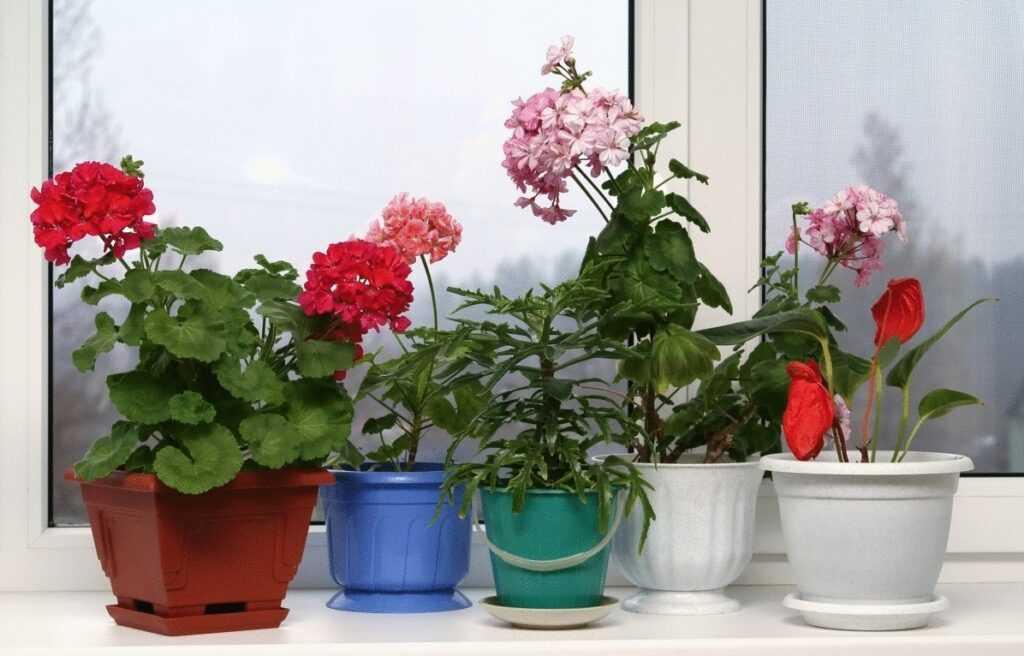 Комнатные растения зимой, как ухаживать в домашних условиях