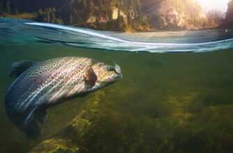 Заработать на рыбе, которую поймал сам на рыбалке