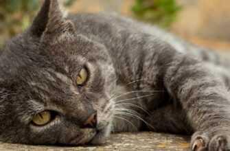 Блудливый кот который всегда возвращается домой
