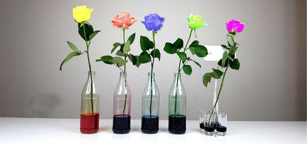 Покрасить розы самостоятельно и превратить их в цветочный шедевр