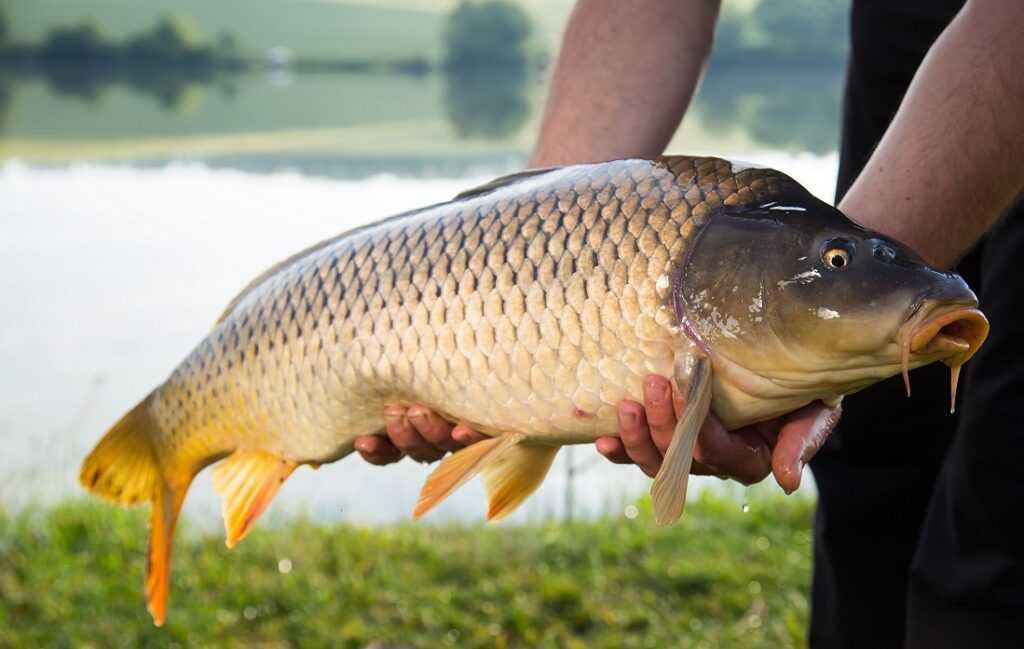 Рыбалка в начале осени, какую рыбу можно ловить