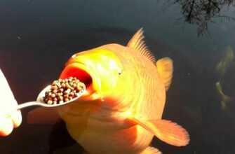 Что едят рыбы и сколько в естественной среде обитания