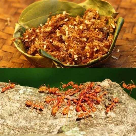 Индийские блюда. Чапраха - чатни из красных муравьев