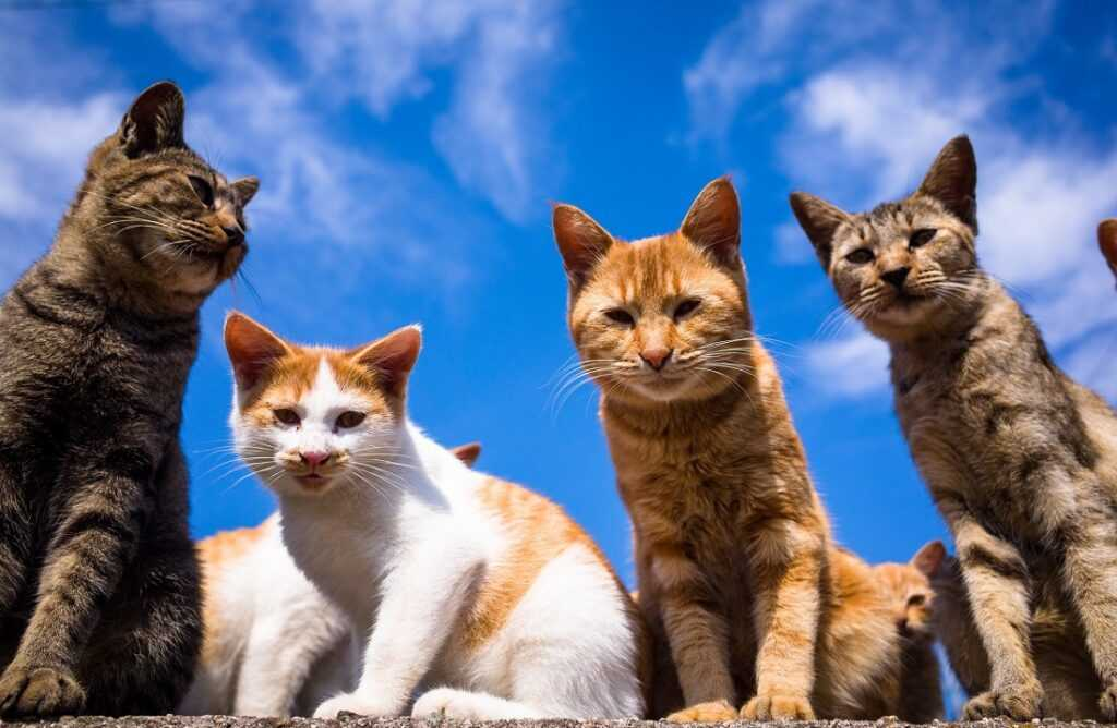 Кошки играют особую роль в жизни человека