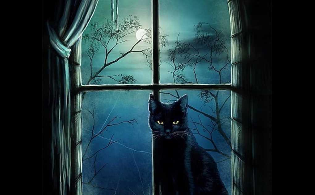 Черный котенок появился у нас в доме. Мистический случай