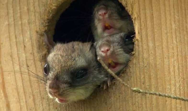Мышонка вырастили дома как домашнего питомца