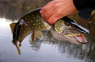 Опасный случай на рыбалке со счастливой развязкой