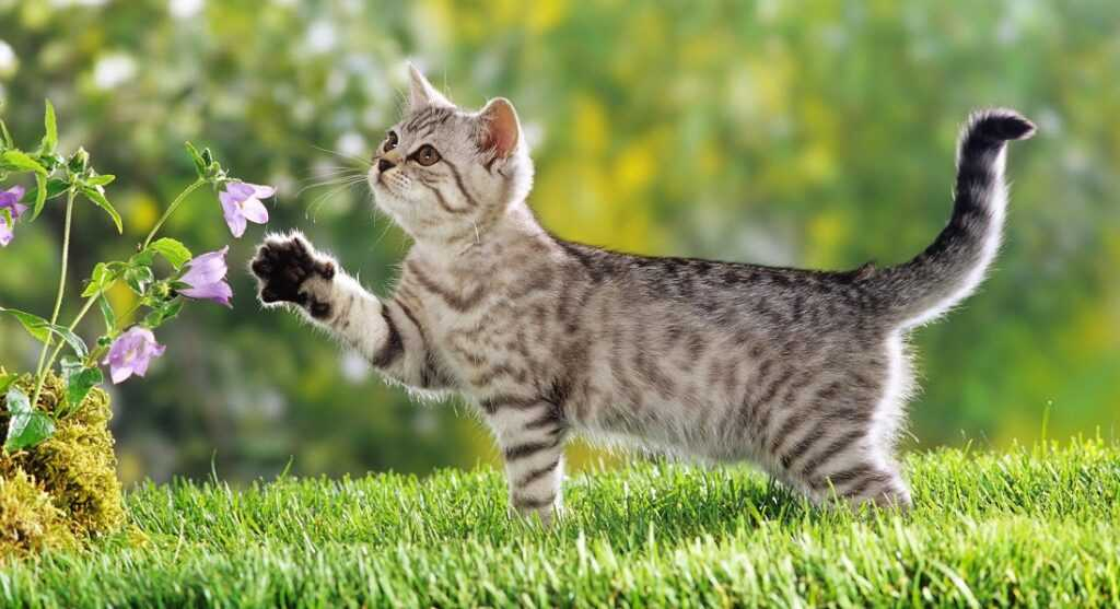 Рассказы о кошках. Кошки играют особую роль в жизни человека