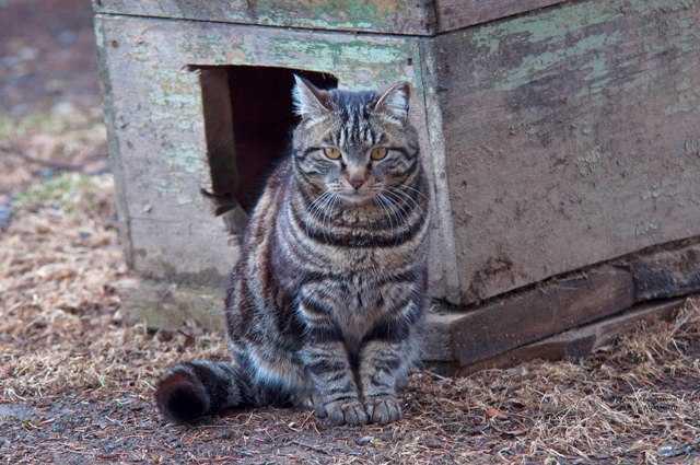 Деревенские животные в деревне, реальные фотографии