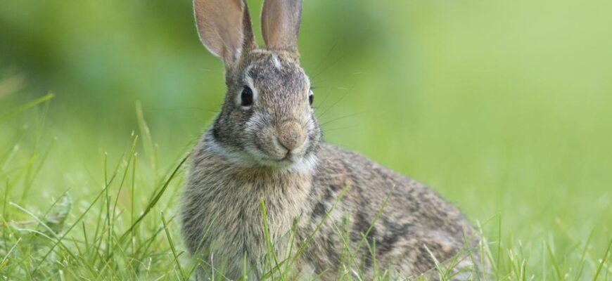 Домашний кролик, 5 причин завести питомца дома