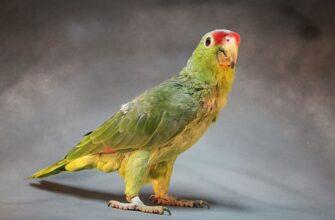 Жениться пора, попугай помог найти мужа, история из жизни