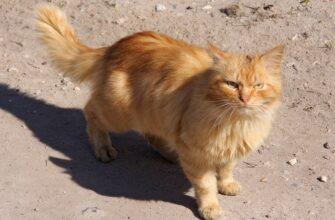 Рыжий кот или кошачья месть обязательно настигнет обидчика