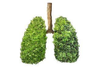 9 лекарственных растений для восстановления работы легких