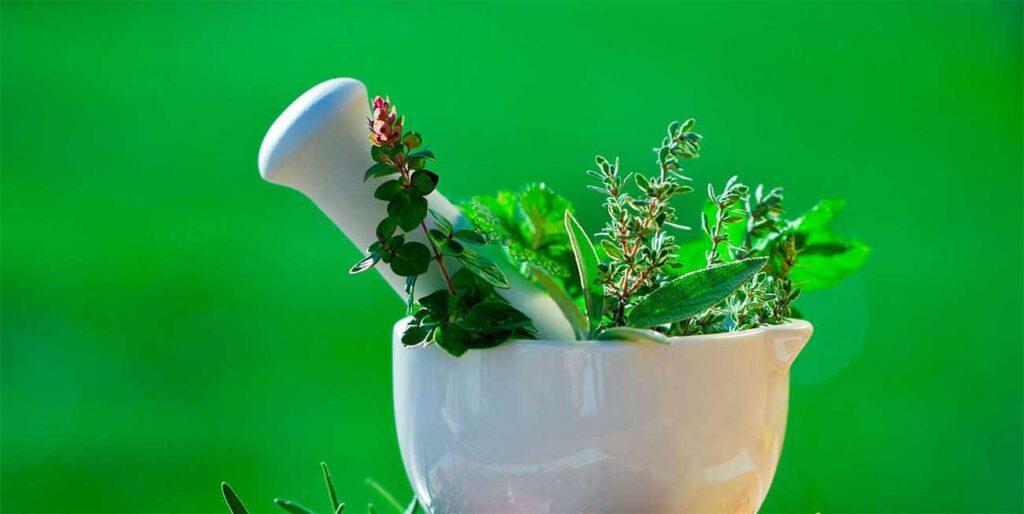 7 лекарственных трав, обладающим антипаразитическим эффектом