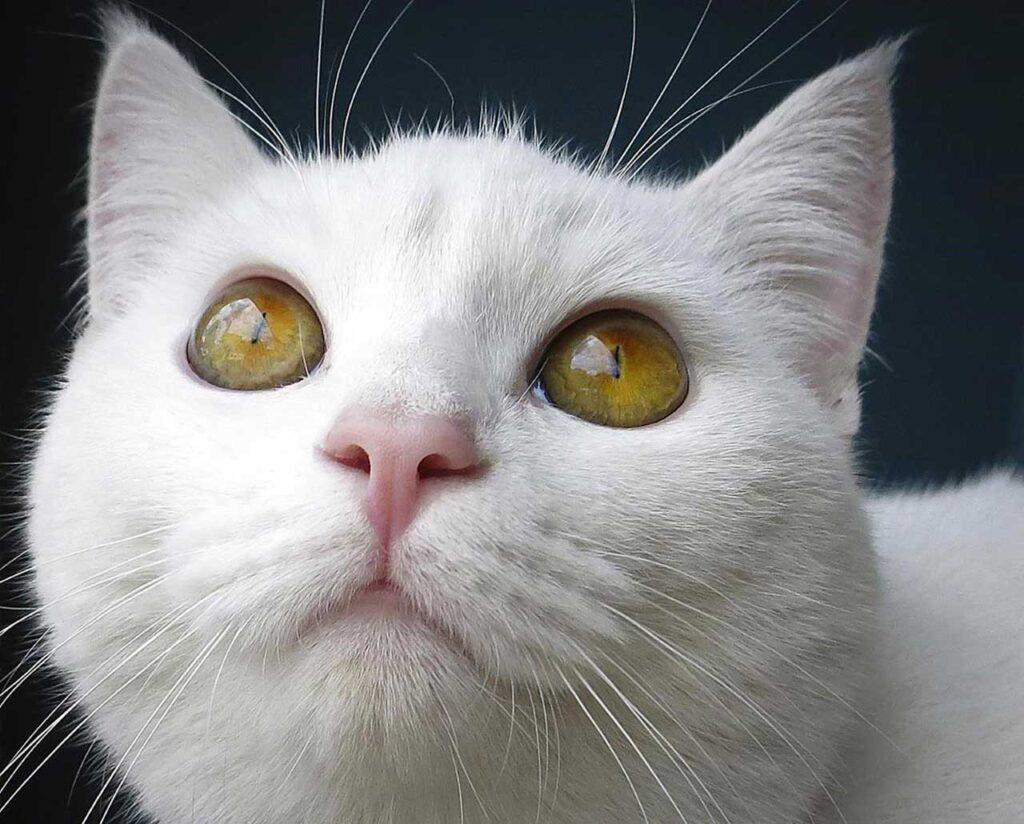 Необычная поездка иракского кота-беженца. Кот преодолел всю Европу, чтобы найти свою семью в Норвегии.