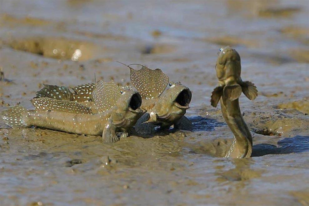 Рыбы выходят из воды