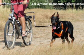 Как активно проводить время с собакой