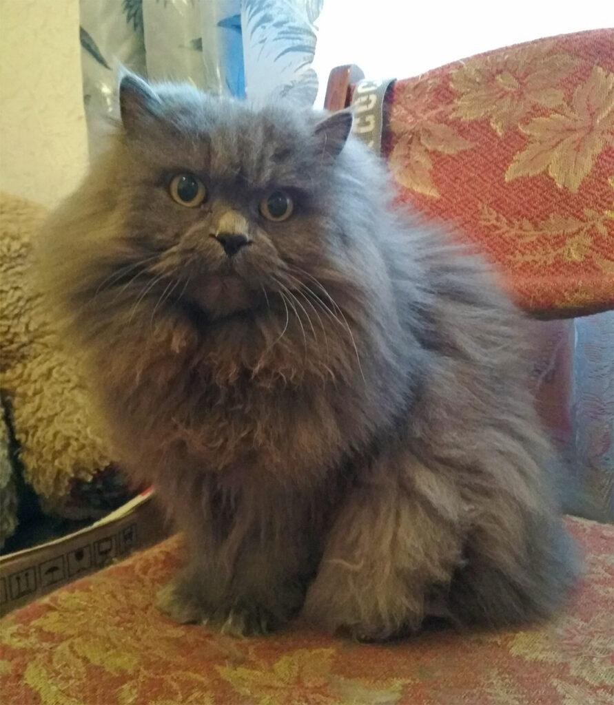 Волшебная кошка по имени Маркиза